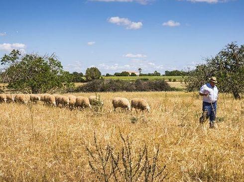 Foto 20 de Carnes en Felanitx | Ramaders Agrupats