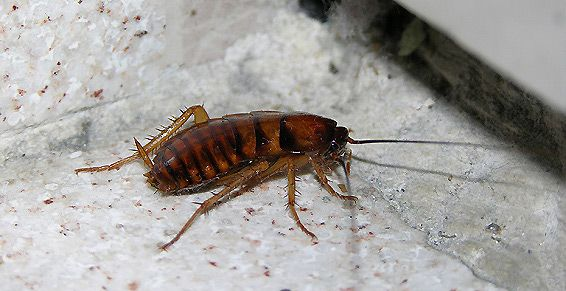Control de insectos en Castellón de la Plana
