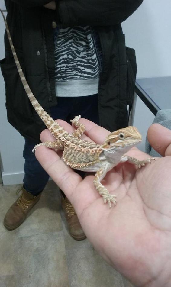 Clínica Veterinaria en animales exóticos en Madrid