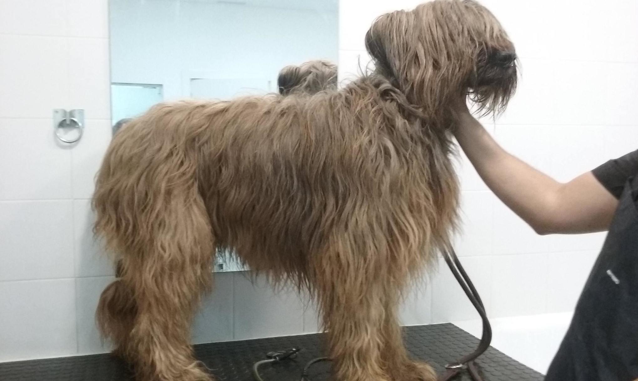 Centro de belleza canina