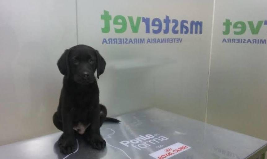 Clínica Veterinaria en Madrid