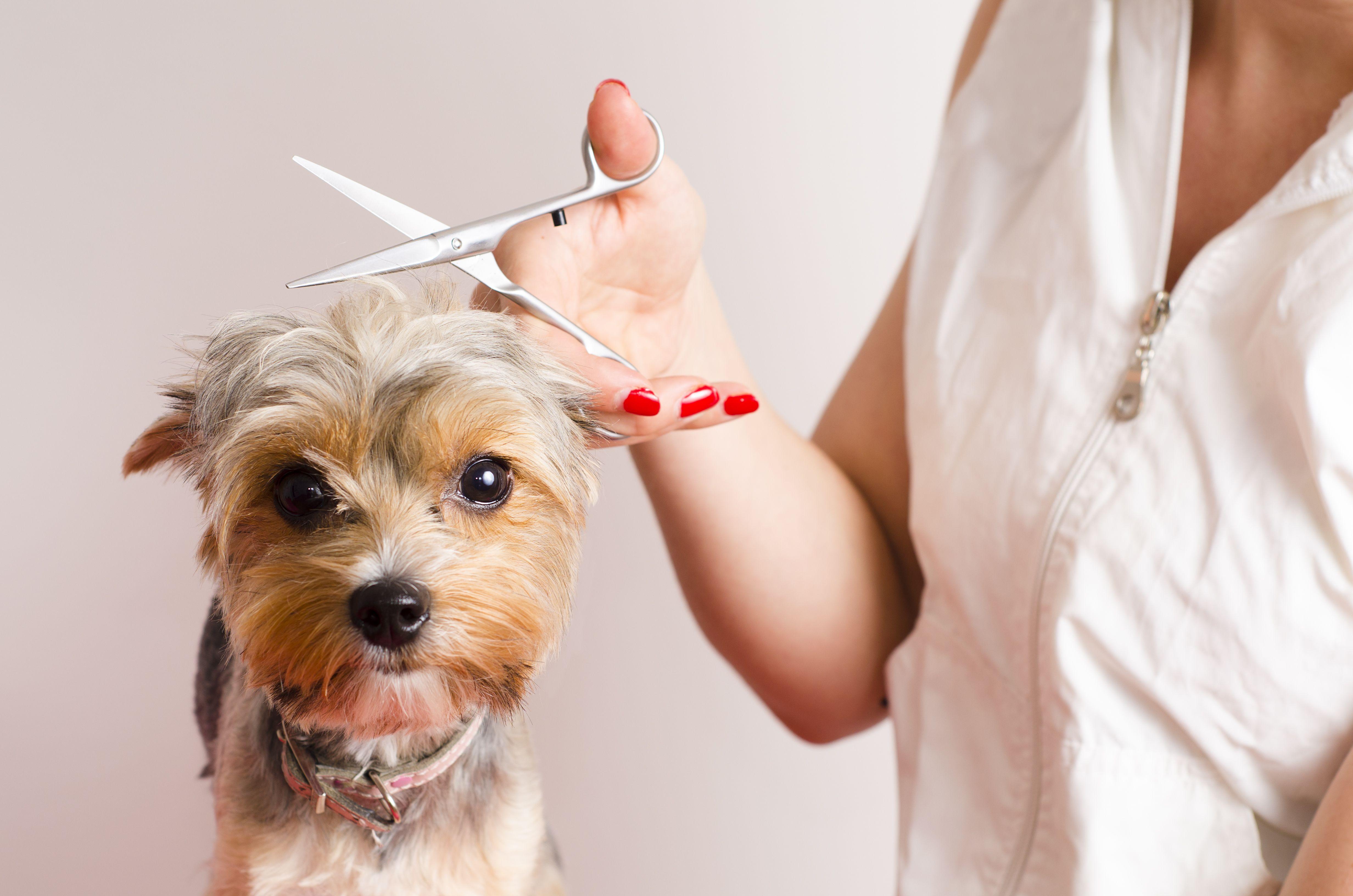 Peluquería canina a domicilio: Servicios de Lanossa Limpiezas