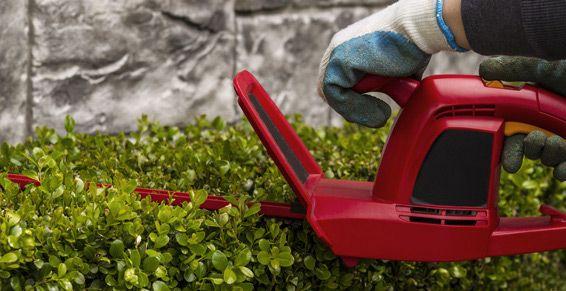 Jardinería: Servicios de Lanossa Limpiezas