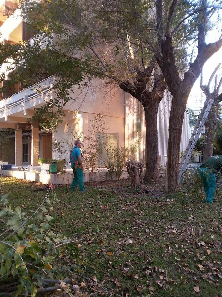 Poda de árboles en espacios comunitarios