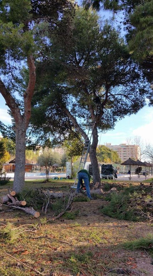 Servicio de poda de árboles