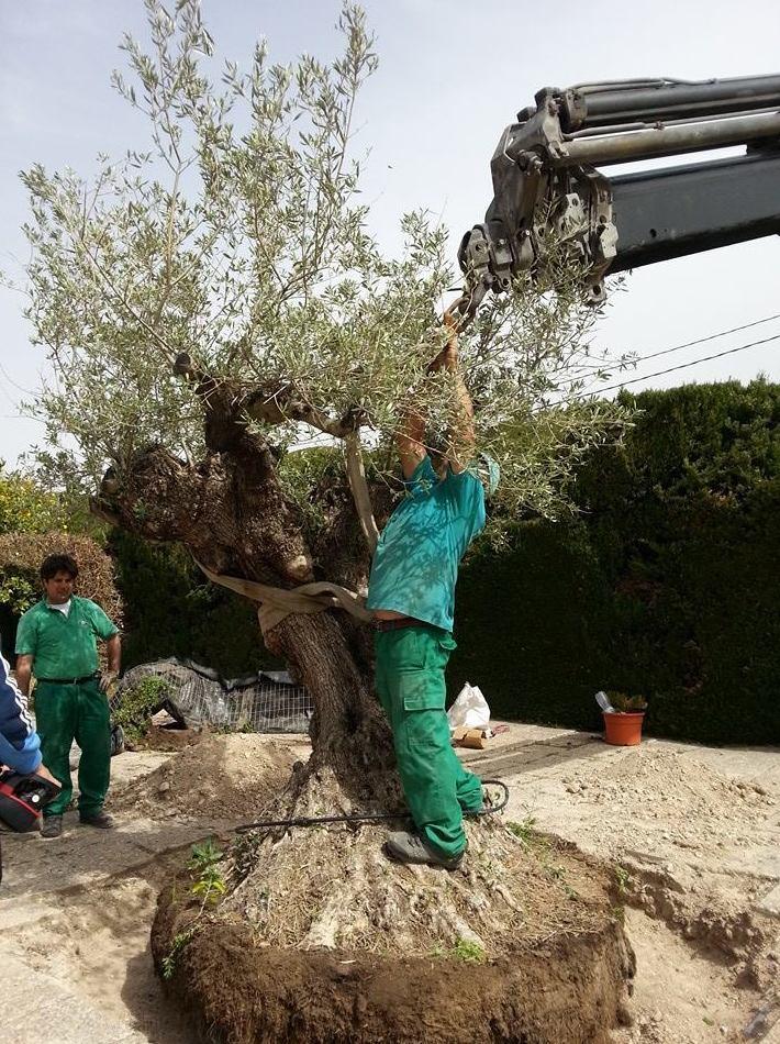 Plantación de árboles en jardines urbanos