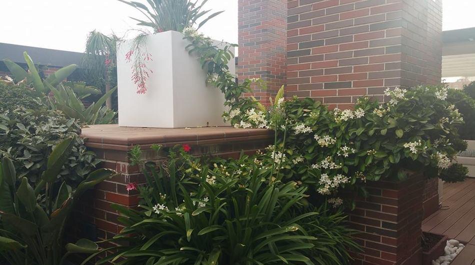 Diseño de jardines de zonas comunes