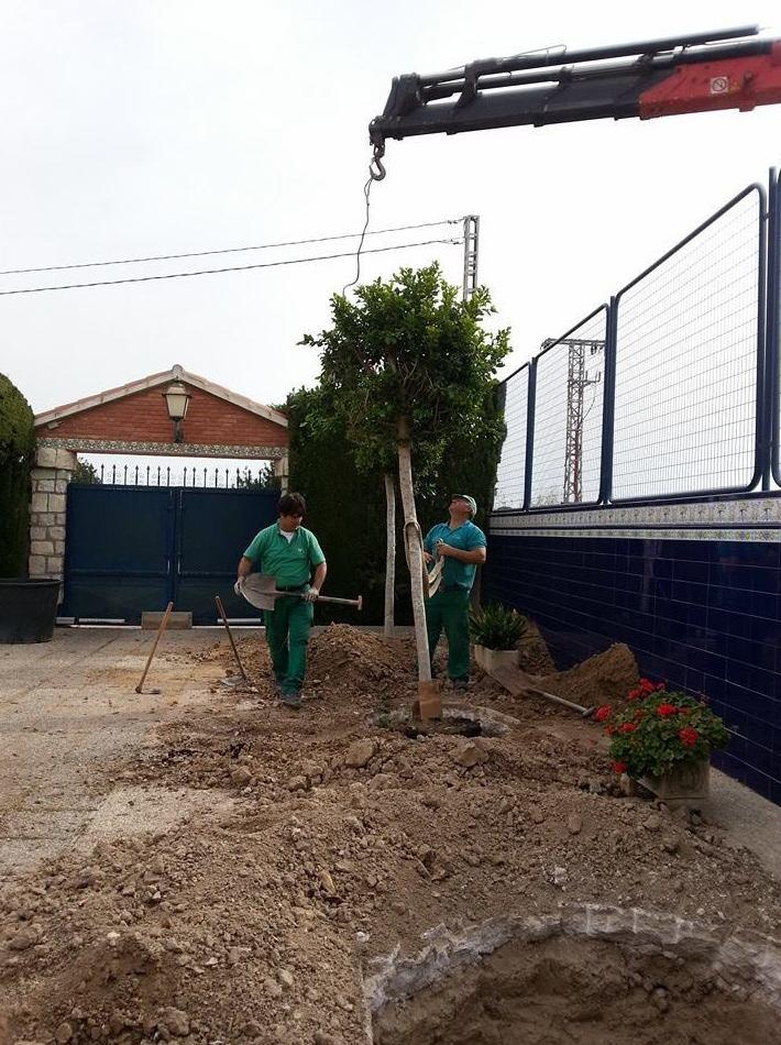 Preparación de jardín para plantación