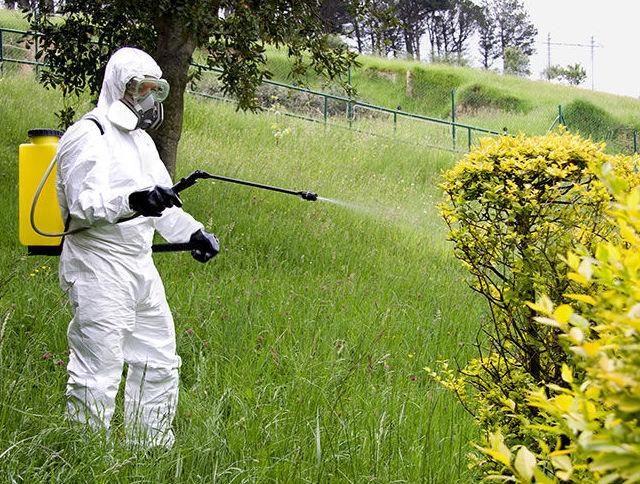 Prevención y control de plagas en cultivos ornamentales: Servicios de Mantenimientos y Jardinería La Jara
