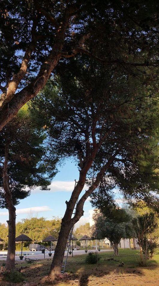 Cuidado de árboles de todas las especies