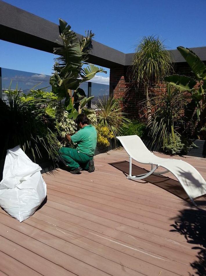 Decoración de terrazas e interiores: Servicios de Mantenimientos y Jardinería La Jara