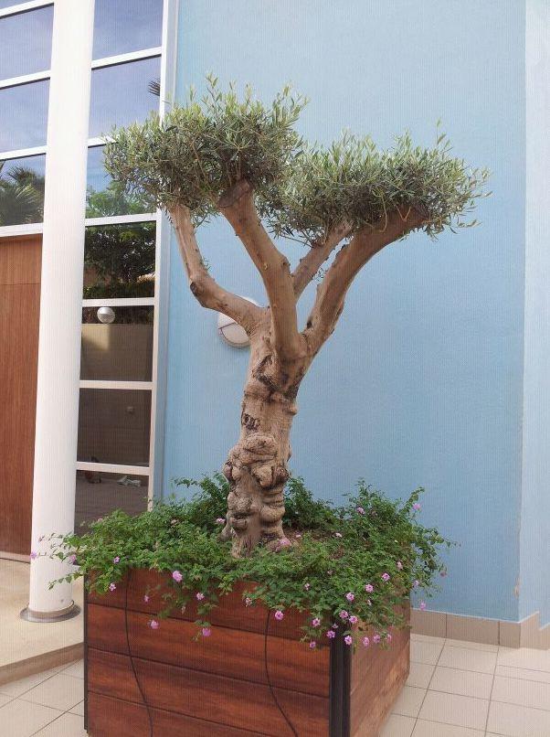 Decoración de espacios exteriores  con plantas