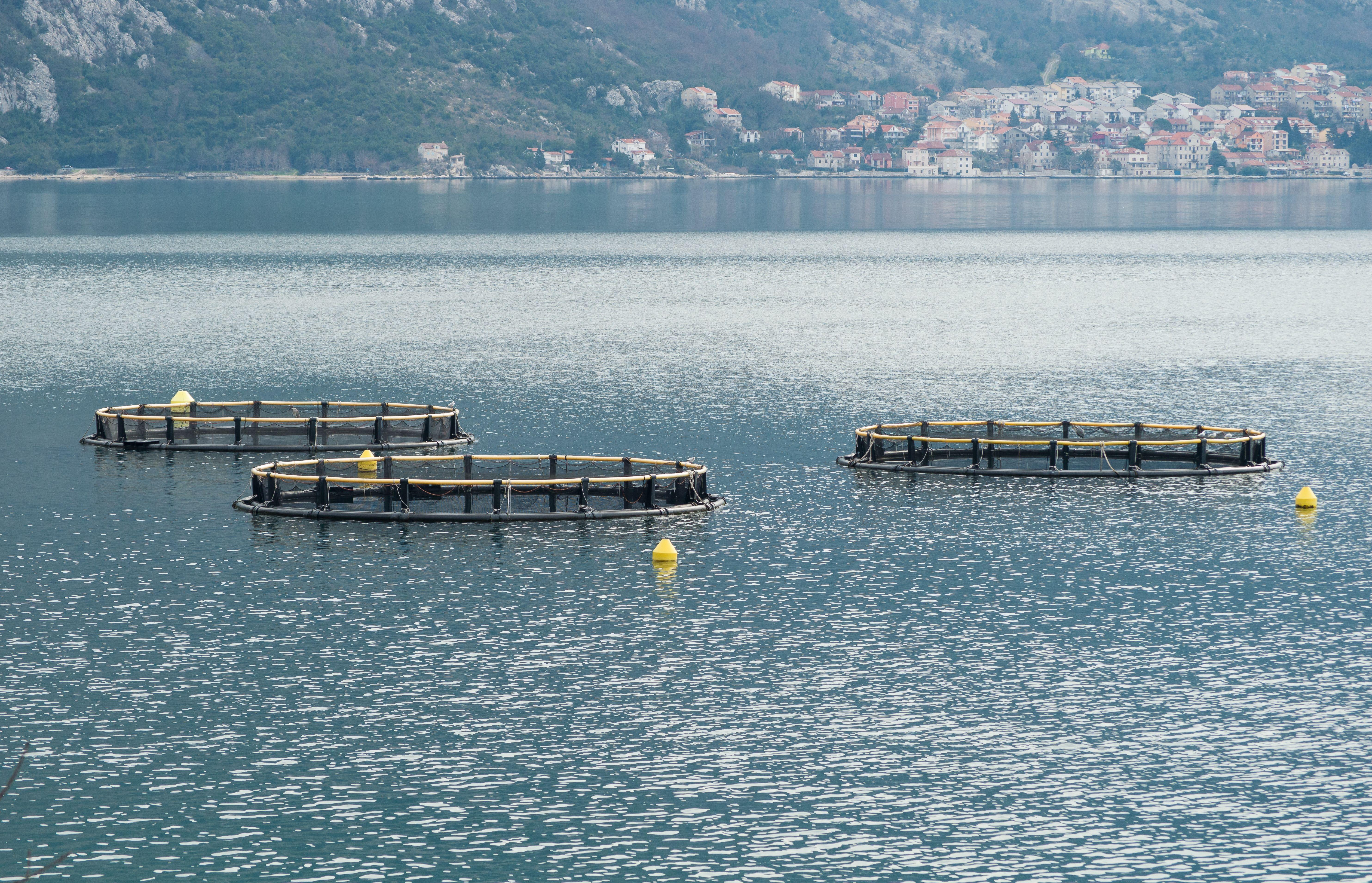 Productos del mar en Pontevedra