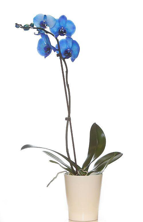 Orquídeas para regalo