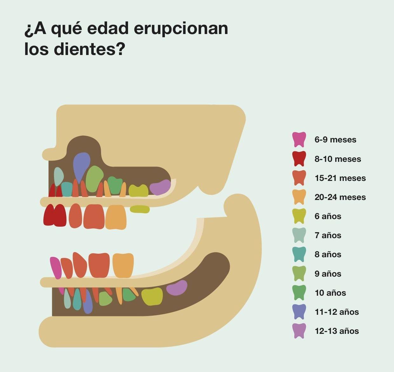 Aquí os mostramos un fácil dibujo explicativo sobre el recambio de los dientes en los niños