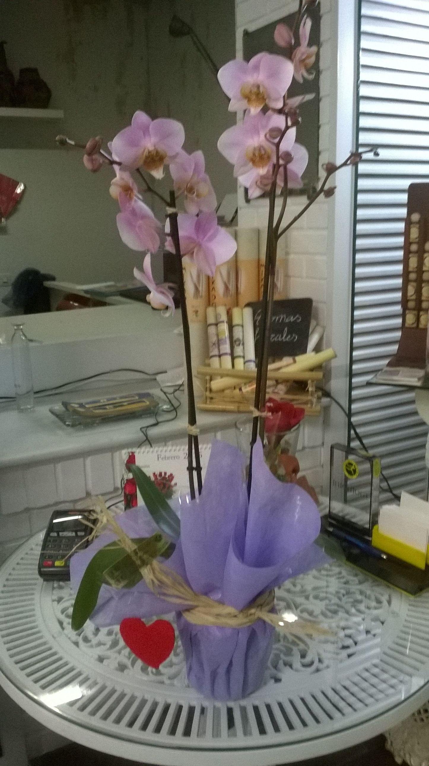 Orquidea decorada