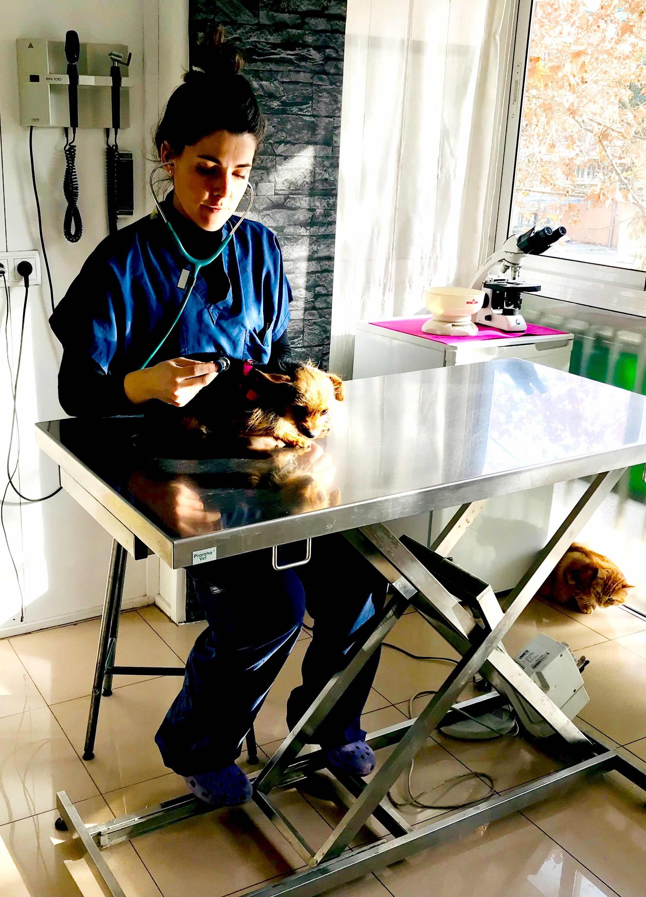Visitas veterinarias a domicilio