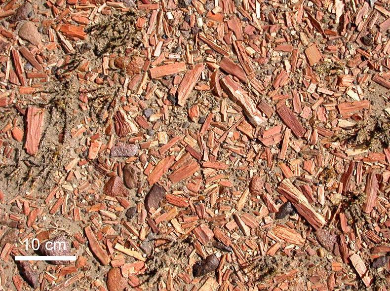 Venta de astilla: Productos y servicios de Forestal Arauzo