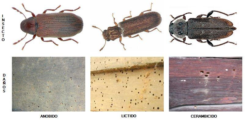 Eliminación de plagas de insectos