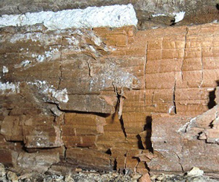 Eliminación de plagas en la madera