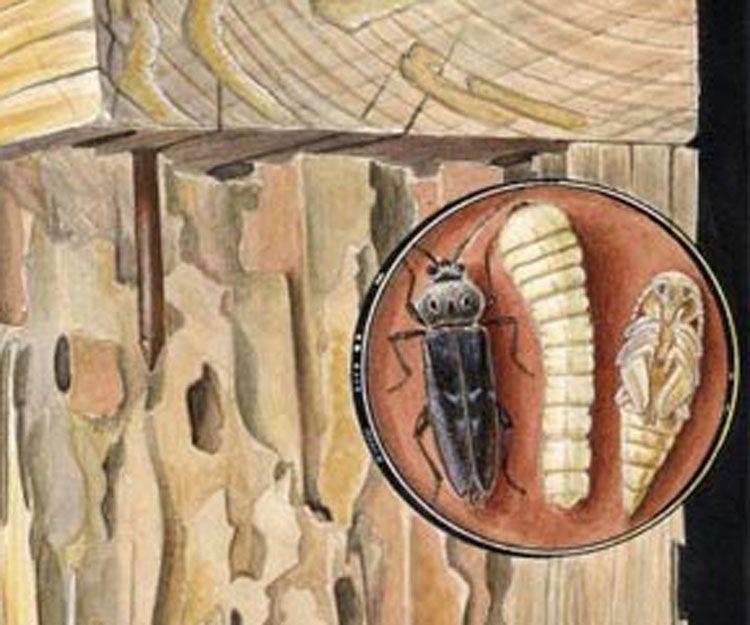 Especialistas en tratamientos contra plagas en la madera