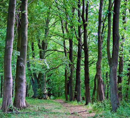 medio-ambiente-bosque-ecológico