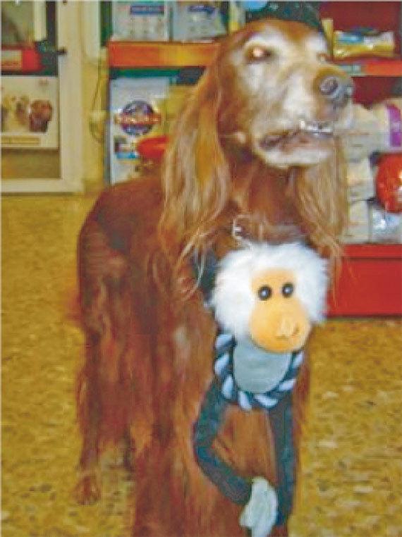 Especialistas en juguetes para mascotas