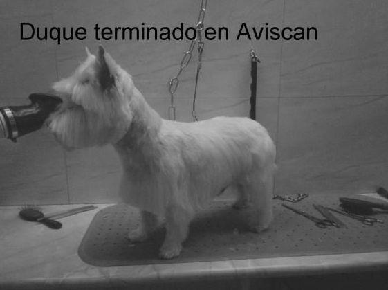 peluquerias caninas zaragoza