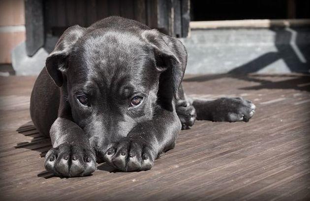 vacunas perros Zaragoza