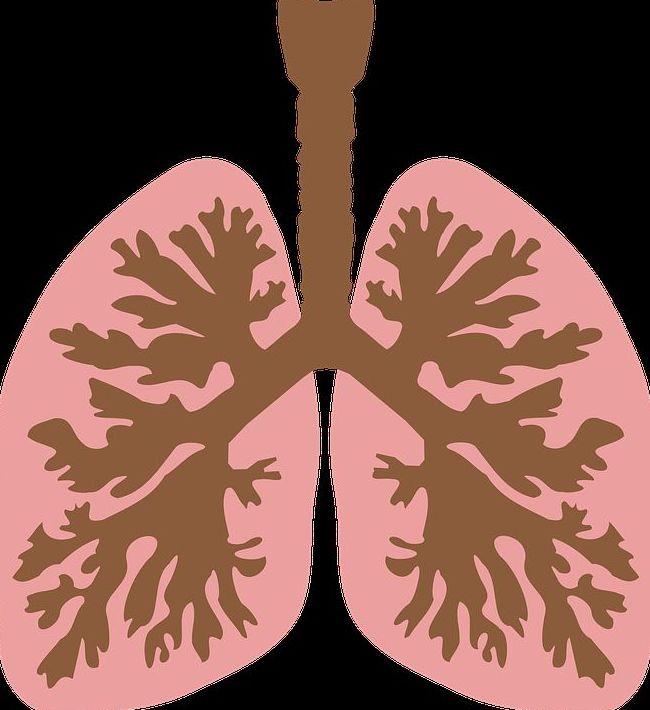 Categorias de las enfermedades pulmonares