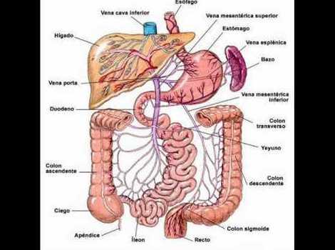 El sistema digestivo y la energia en Medicina China