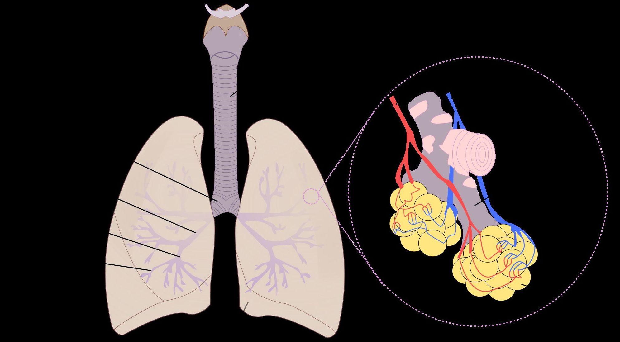Dificultad respiratoria debido a deficiencia energética de riñón.
