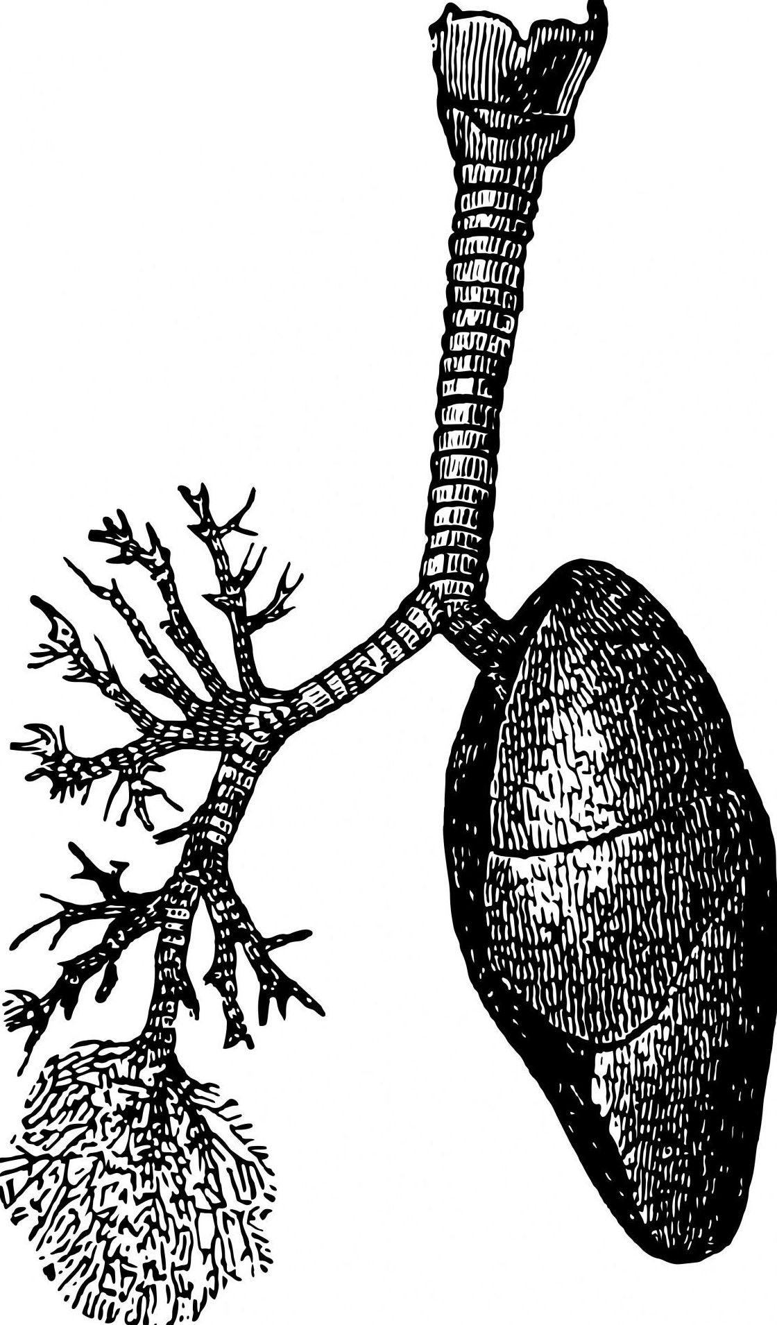 Los riñones y los problemas pulmonares