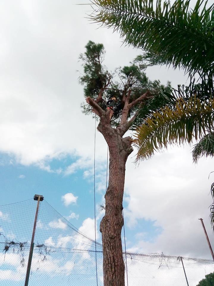 Poda y tala de árboles en Valverde del Camino