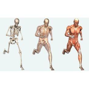 Fisioterapia : Servicios de Clínica de Fisioterapia y Osteopatía J.J. Bosca