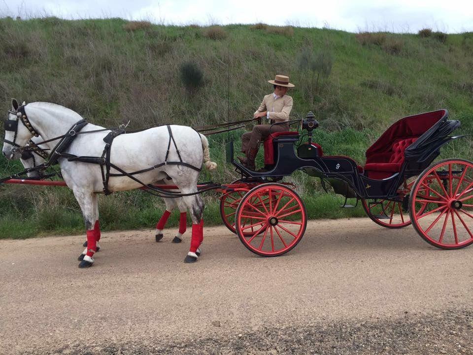 Coches de caballos para bodas en Don Benito, Badajoz