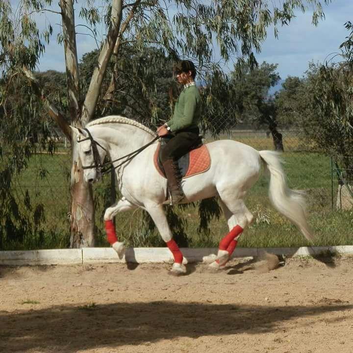 Clases de equitación en Don Benito, Badajoz