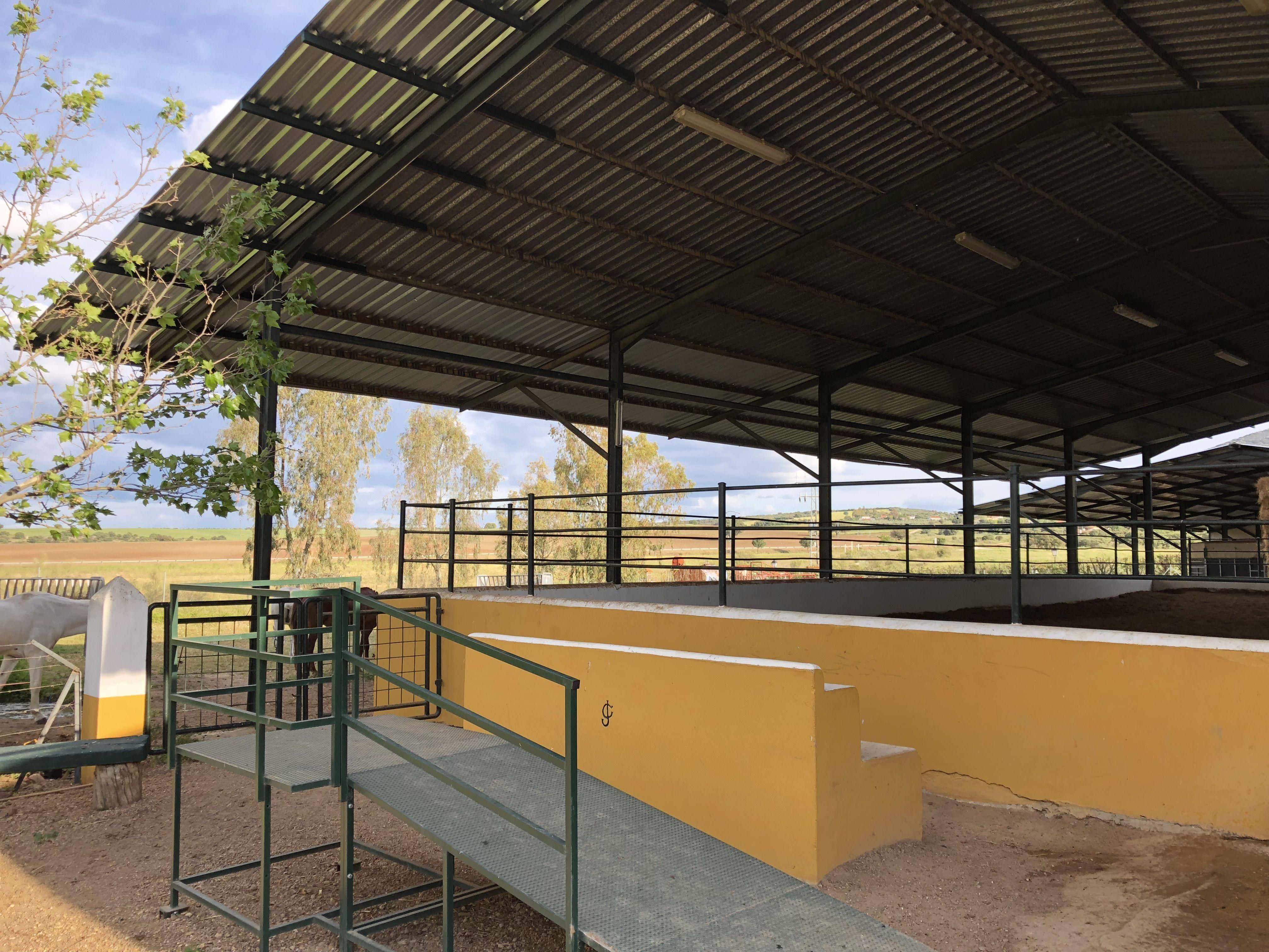 Escuela ecuestre en Don Benito, Badajoz