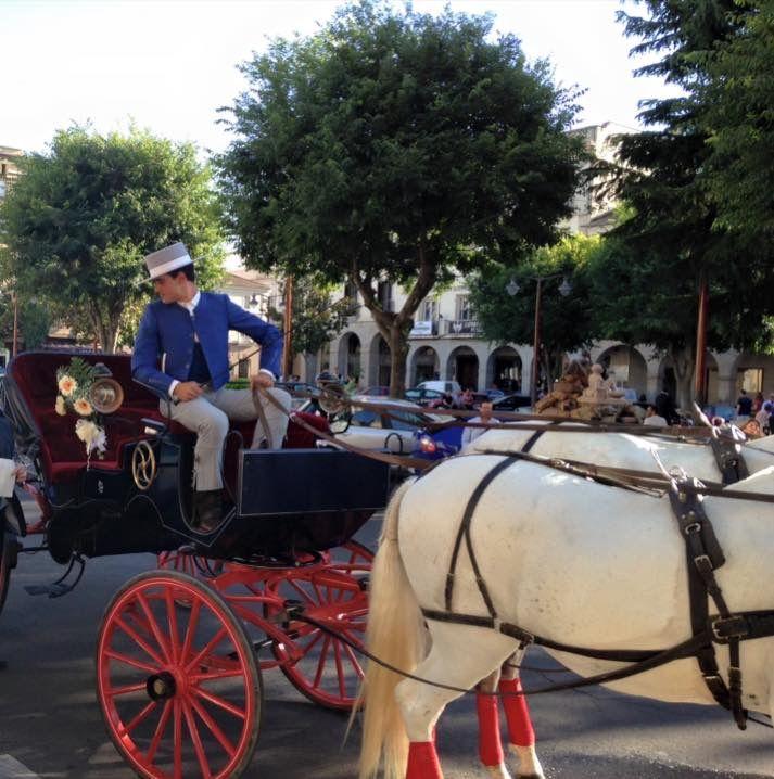 Coches de caballos para celebraciones