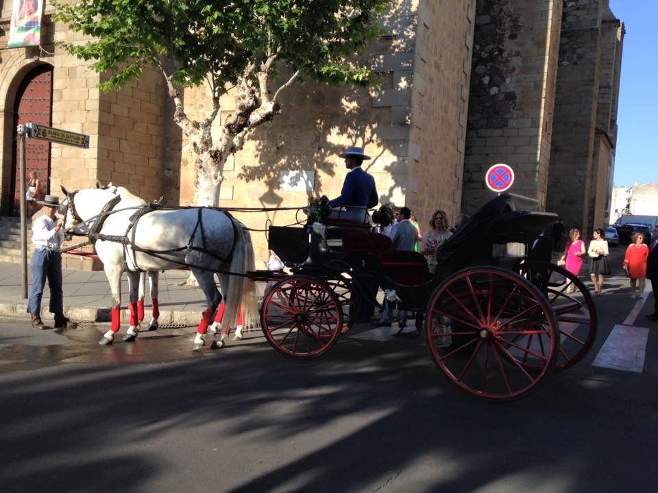Coches de caballos para bodas: Servicios de Picadero Escuela Las Cruces