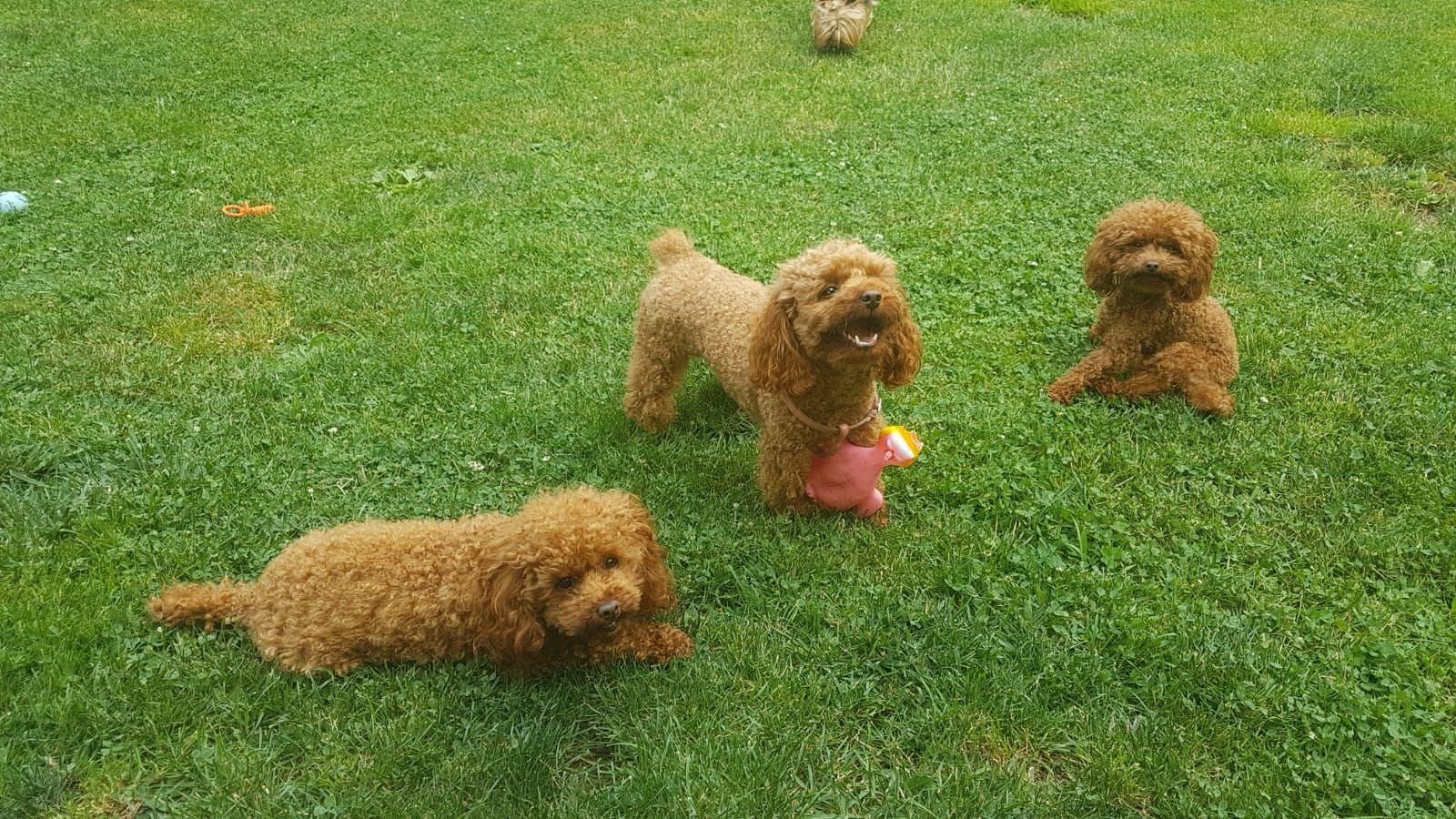 Nuestros perritos disfrutan el verano!!!