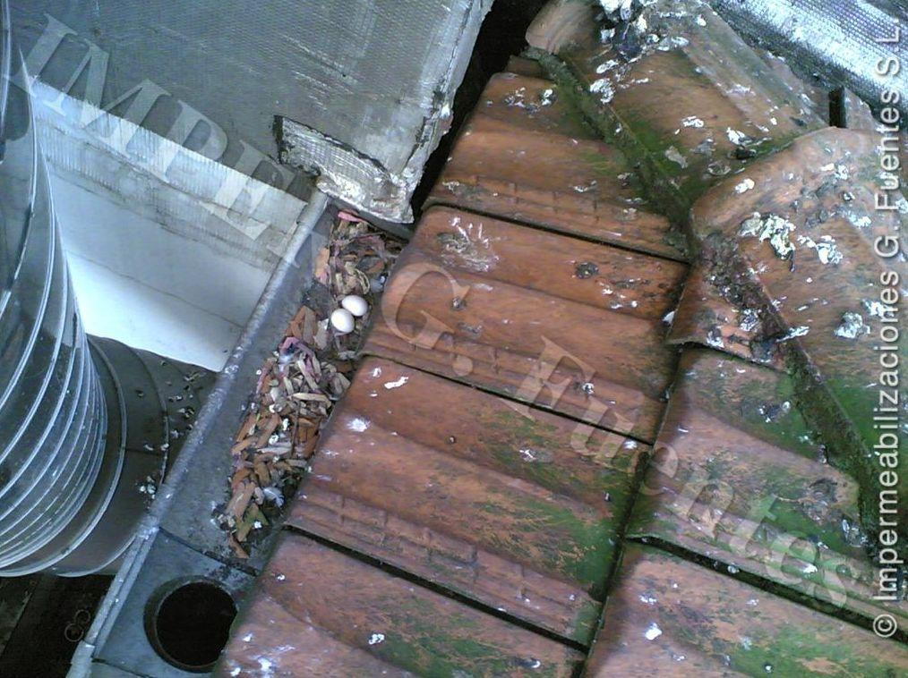 Mantenimiento y limpieza de tejados para evitar el anidamiento de aves