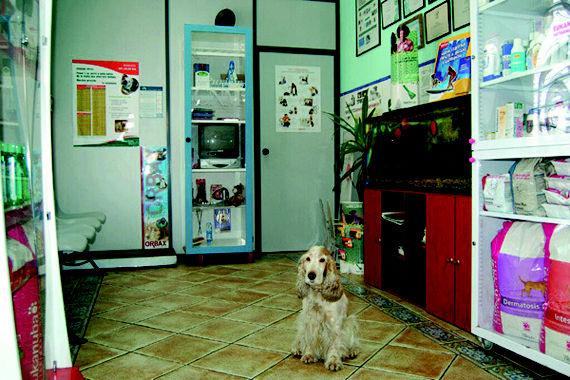 Foto 7 de Veterinarios en Gijón | Asturcón Clínica Veterinaria