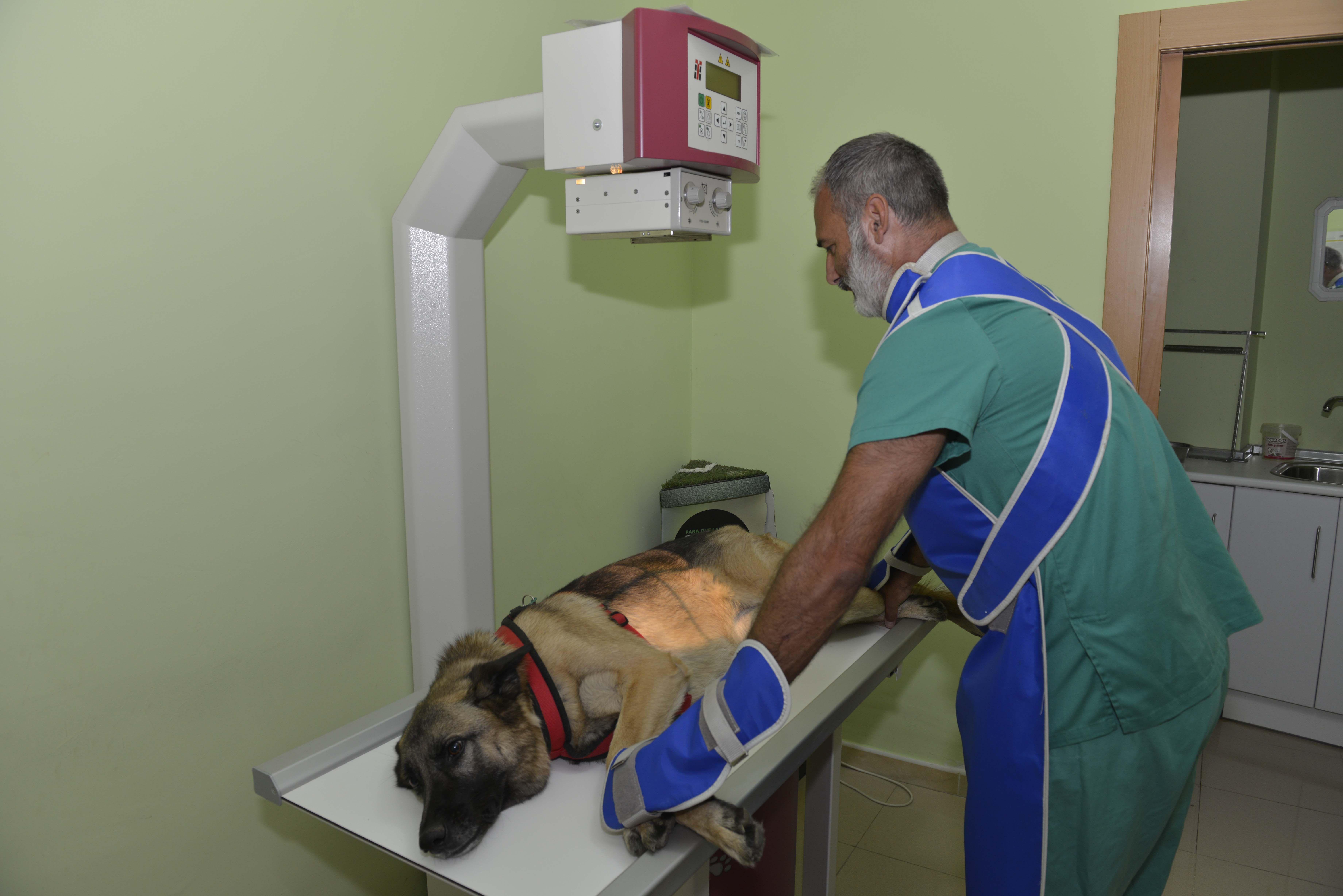 Rayos x y ecografías para animales