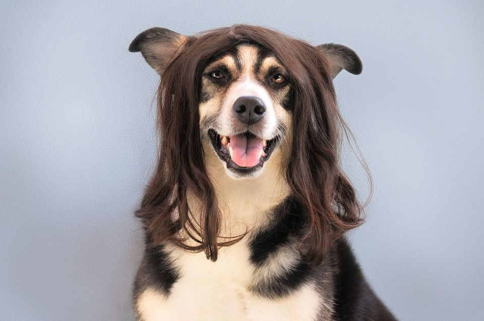 Peluquería y estética canina y felina: ¿Qué hacemos por tu mascota? de Clínica Veterinaria Corazón de León