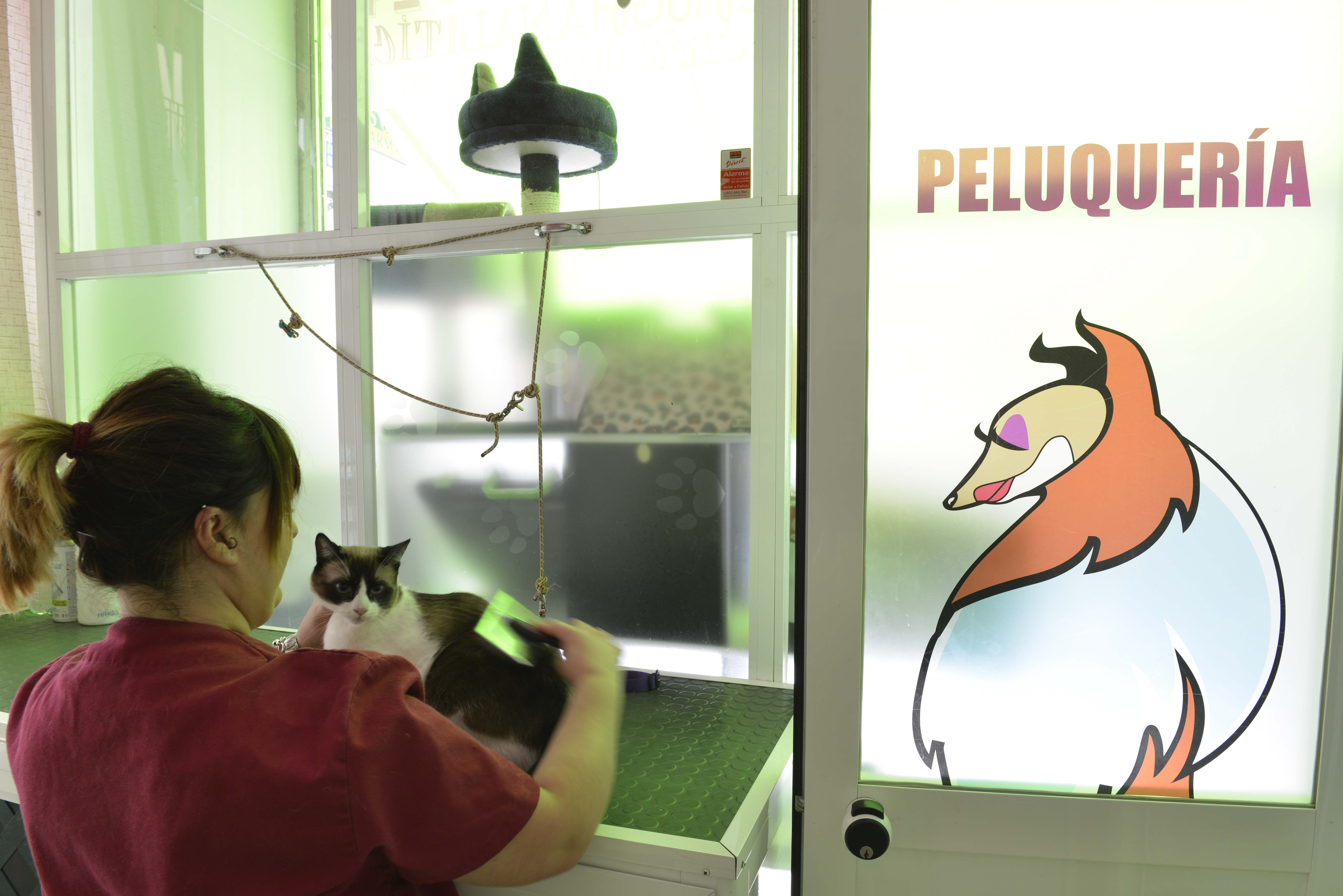Peluquería y estética felina en Jaén
