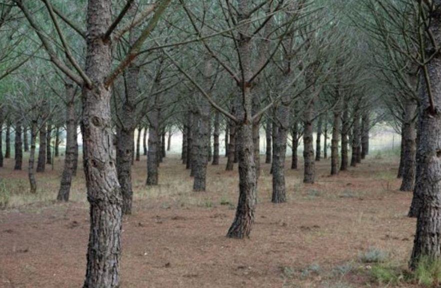 Desbroces forestales: Servicios de Mantenimientos Curros