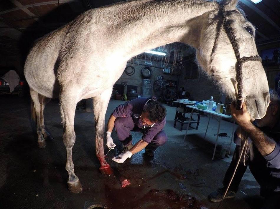 Operación a caballo en una pata