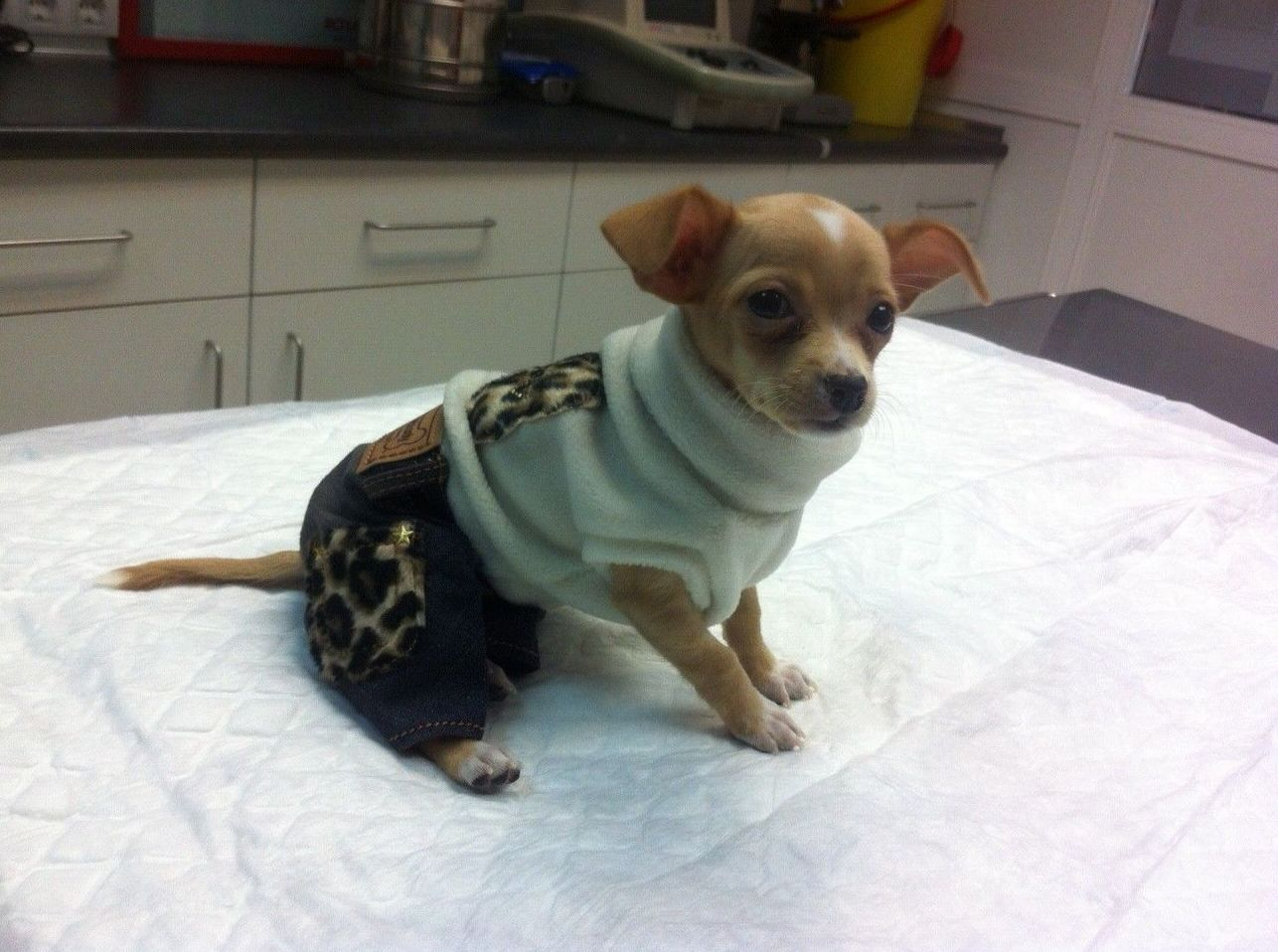 Servicio de peluquería para perros
