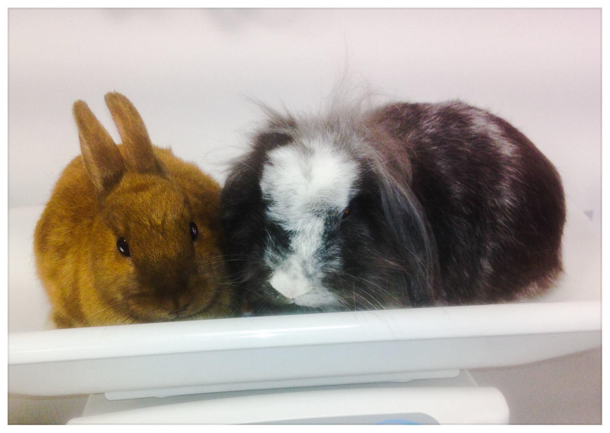 Mascotas: Especialidades: Servicios de V3 Equip Veterinari